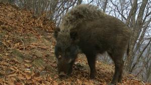 Двое браконьеров задержаны в Приморье, один скрылся