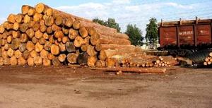 Пункты приёма древесины создадут в Приморье