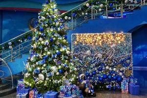 В новом году Приморский океанариум откроется 2 января