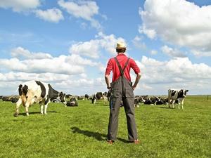 В Приморье фермер намошенничал с субсидиями почти на 15 млн. рублей
