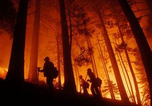Полномочия по надзору за лесами могут отобрать у Приморья, передав на федеральный уровень