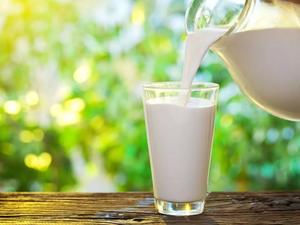 Новая Зеландия запускает в Приморье уникальный молочный проект