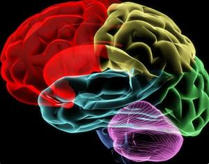 Возможности мозга...
