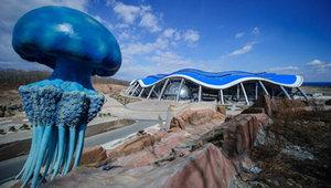Удивительное развлечение собирает очереди в Приморском океанариуме