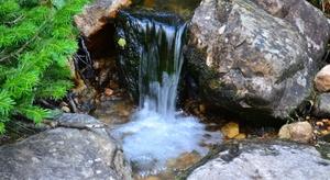 Пить воду из родников на Фадеева и Шаморы опасно для здоровья