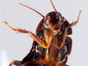Жителям Владивостока подселяют тараканов