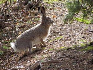 В Приморье вместо зайца мужчина застрелил напарника