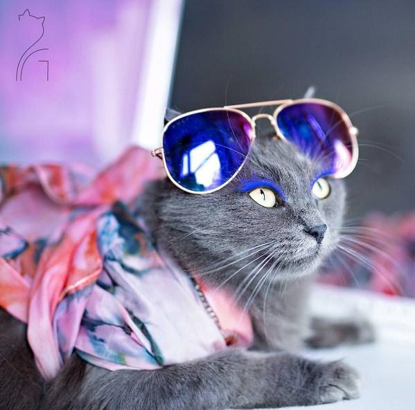 Модные имена кошке
