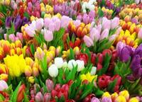 Цивилизованный формат торговли: во Владивостоке определено 190 площадок для продажи цветов к 8 Марта